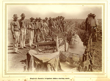 Kanaka workers setting up irrigation channels in the cane fields, Bingera, Queensland, c.1905. State Library of Queensland