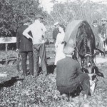The internees came to the rescue of Prince, a valuable horse that had fallen into a large underground cistern. Prince was rescued by the mariners who, with a system of ropes and planks, and a large version of a boson's chair, lifted the horse out. c.1915-6. Berrima District Museum